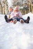 sledging多雪的森林地的男孩女孩 免版税图库摄影