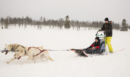 Sledging with dogs Stock Images