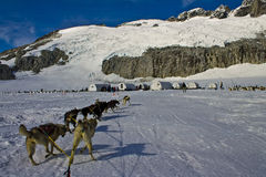 sleding在冰川的狗 免版税图库摄影