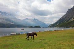 Sleek horse Royalty Free Stock Images