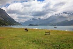 Sleek thoroughbred horse horse on coast Stock Photo