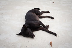 Sleep as a dog Royalty Free Stock Photography