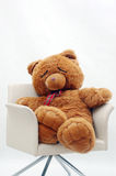 Sleep bear. A sleep bear in a white chair with white background royalty free stock photography