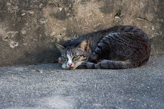 Sleep cat Stock Images