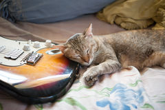 Sleep cat and guitar. Sleep cat and electric guitar Royalty Free Stock Image