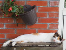 Sleep Cat Royalty Free Stock Photo