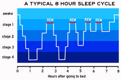 Sleep cycle. Graph with the typical eight hour sleep cycle Royalty Free Stock Photos