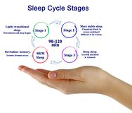 Sleep Cycle Stages. Woman presenting Sleep Cycle Stages Stock Photography