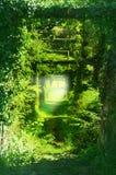 Sleep in de groene tunnels van de takken van bomen, gras, het beklimmen wijnstokken beeld stock foto