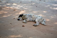 Sleep dog on the ground Stock Image