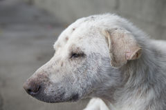 Sleep Dog stock images