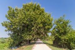 Sleep door bomen en andere vegetatie in Brazos-het Park van de Krommingsstaat dichtbij Houston, Texas wordt omringd dat royalty-vrije stock foto's