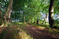 Sleep door een bos in de vroege herfst Royalty-vrije Stock Afbeelding