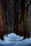 Sleep door sneeuw wordt behandeld die royalty-vrije stock foto