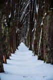Sleep door sneeuw wordt behandeld die royalty-vrije stock fotografie