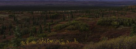Sleep door toendralandschap, de Herfstseizoen van Alaska stock afbeelding