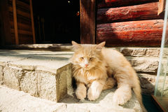 Sleep fluffy ginger cat at the entrance to the building Royalty Free Stock Photos