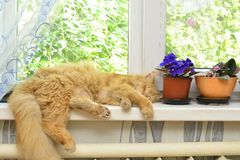 Sleep ginger cat on a window sill Royalty Free Stock Image