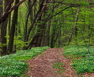 Sleep in groen tot bloei komend bos in bomen, achtergrondaard royalty-vrije stock foto