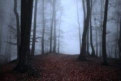 Sleep in het bos Stock Fotografie