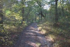 Sleep in het bos in de herfst, landschap van weg in toneelaard bij daling en kleurrijke bomen Royalty-vrije Stock Fotografie