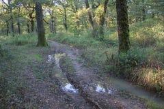 Sleep in het bos in de herfst, landschap van weg in toneelaard bij daling en kleurrijke bomen Royalty-vrije Stock Afbeeldingen