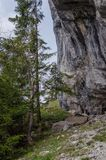 Sleep in het bos langs de rotsachtige heuvel Stock Afbeeldingen