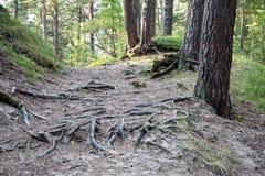 Sleep in het hout dichtbij overzees in de duinen royalty-vrije stock fotografie