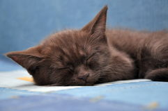 Sleep kitten Stock Photos