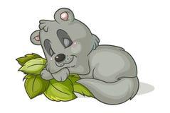Sleep little raccoon Stock Image