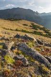 Sleep Ridge Tundra stock foto's