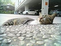 Sleep time. I can sleep everywhere :3 Stock Images
