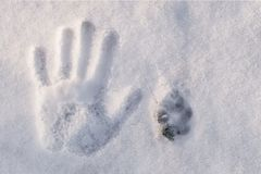 Sleep van hand en sleep van hond op witte sneeuw, hoogste mening Royalty-vrije Stock Fotografie