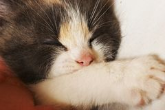 Sleeper baby Royalty Free Stock Image