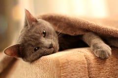 Sleeper Kitty Royalty Free Stock Photos