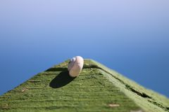Sleeper Snail. Little winkle is on wood Royalty Free Stock Images