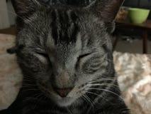 Sleepie 免版税图库摄影