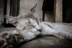 Sleepin Cat Royalty Free Stock Photo
