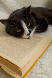 Sleepin preto e branco do gato no livro velho Fotografia de Stock Royalty Free