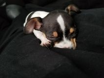 Sleeping adorable puppy stock image