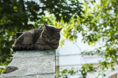 Sleeping alley cat Stock Photography
