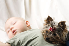 Sleeping baby. Photo of the sleeping baby with a terrier Royalty Free Stock Photos