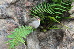 Sleeping baby bird. Standing on a fern Royalty Free Stock Photo