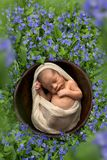 Sleeping baby in bowl. Little newborn baby sleeping in a bowl in a meadow with speedwell flowers stock image