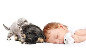 Sleeping Baby Boy and puppy. Sleeping Baby Boy with toy dog, puppy and kitten royalty free stock photography