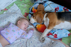 Sleeping baby and dog. Sleeping in bed boy and Beagle dog on the pillow Royalty Free Stock Photography