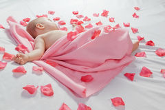 Sleeping baby with a pink blanket around him and rose pe Royalty Free Stock Images