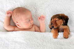 Sleeping baby and puppy. Newborn baby and a dachshund puppy sleeping together