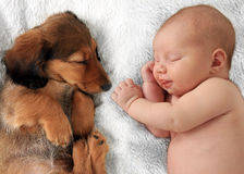 Sleeping baby and puppy. Newborn baby girl and dachshund puppy asleep on a white blanket royalty free stock photo