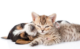 Sleeping basset hound puppy embracing tabby kitten. isolated. On white stock images